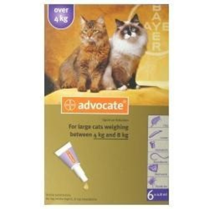 advocate for cats instructions