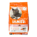 IAMS Cat Salmon and Chicken
